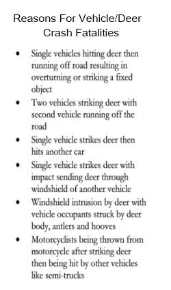 Reasons For Deer Vehicle Crash Fatalities