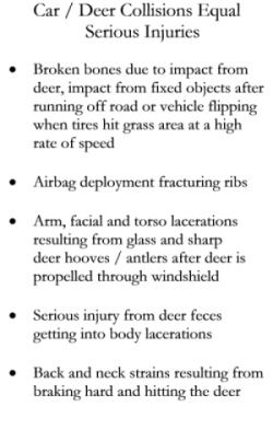 Deer Car Collisions Equal Serious Injuries