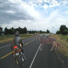 Deer and Motorcycle
